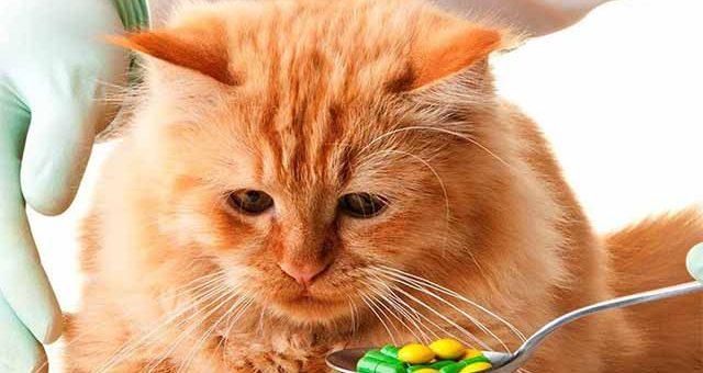 Если кот отравился что дать