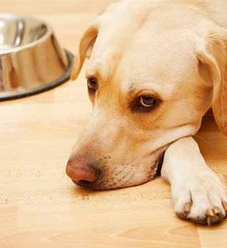 Пищевое отравление у собак