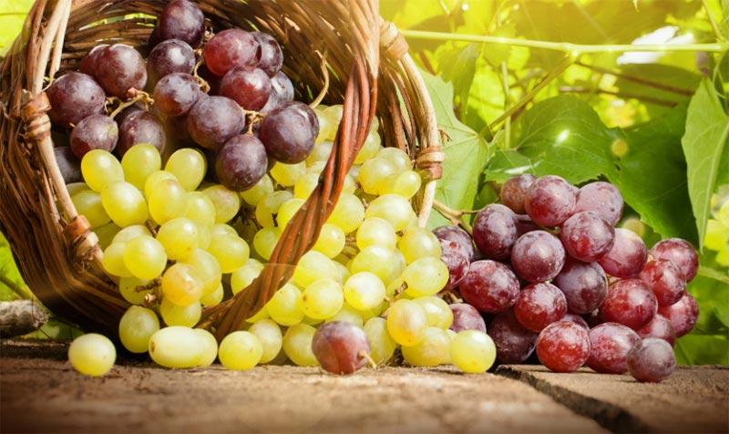 может ли от винограда болеть живот