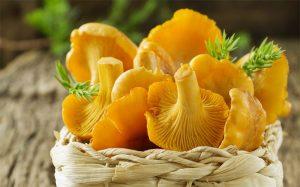 Как принимать грибы лисички от паразитов