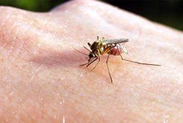 Что делать при укусе насекомого
